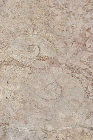 Oucanes de Chabrières - Ammonites -  Réallon ©Mireille Coulon - Parc national des Ecrins