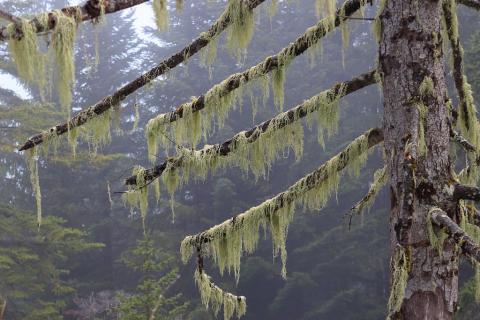 Lichen © C. Albert, PNE