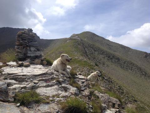 chien protection © R.Papet - Parc national des Écrins