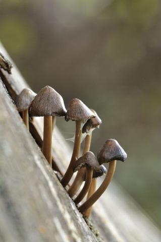 Champignon sur bois ©MireilleCoulon