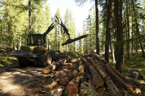 travaux forestiers - © J-P Telmon - PN Ecrins