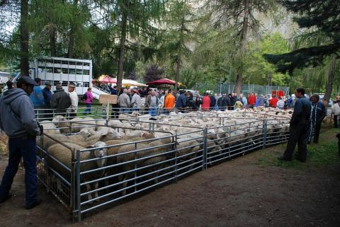 Foire de la chèvre à la Chapelle en Valgaudemar, 4 octobre © Olivier Warluzelle - Parc national des Ecrins