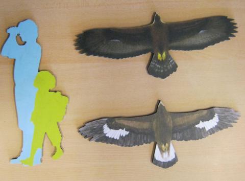 aigle royal - silhouette - école de Puy-Saint-Vincent avec le Parc national des Écrins