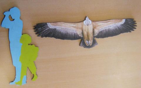 vautour fauve  - silhouette - école de Puy-Saint-Vincent avec le Parc national des Écrins
