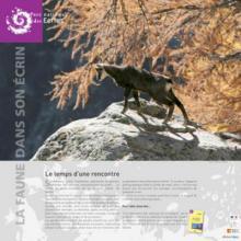 expo faune dans son ecrin - parc national des Ecrins