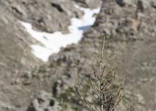 Rouge queue à front blanc  -biodiversité à tous les étages © Steeve Peyron - LPO Embrun