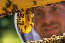 Miel et produits de la ruche © Parc National des Ecrins