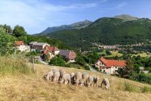 La viande ovine, caprine, bovine et équine © Parc National des Ecrins