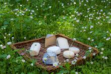 Le lait de chèvres, de brebis et de vaches et les produits laitiers © Parc National des Ecrins