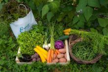 Fruits, légumes, champignons et plantes issues de la cueillette © Parc National des Ecrins