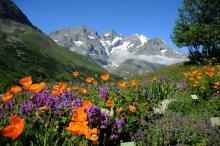 Jardin botanique alpin du Lautaret © Parc National des Ecrins