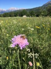 - juin 2019 _ Concours prairies fleuries Champsaur - © D.Vincent - Parc national des Ecrins