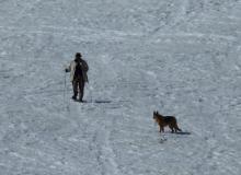 Les chiens ne sont pas acceptés en coeur du parc national - photo PNE
