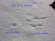 Animation parc national des Ecrins - Ecole les vigneaux - 2014-2015