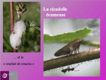 projet pédagogique - CP Vallouise - 2015-2016 avec le Parc national des Ecrins