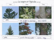 Ecole Pelvoux Vallouise - sortie et restitution traces et indices - projet pédagogique avec le Parc national des Ecrins - 2017-2018