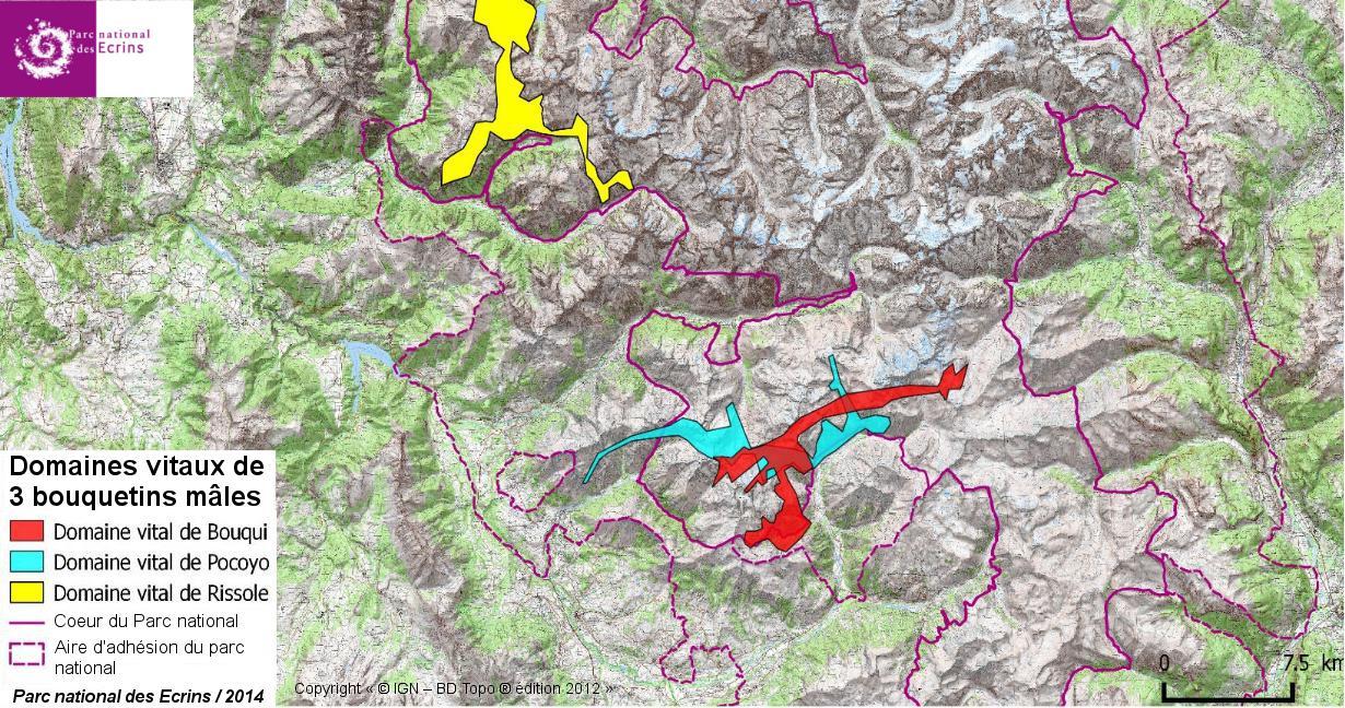 Domaines vitaux 3 mâles bouquetins - © Fond carte IGN - donnéées Parc national des Ecrins