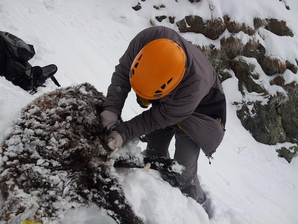 Le bouquetin mort a été retrouvé dans un vallon quasi-inacessible - © L-Imberdis/PNE