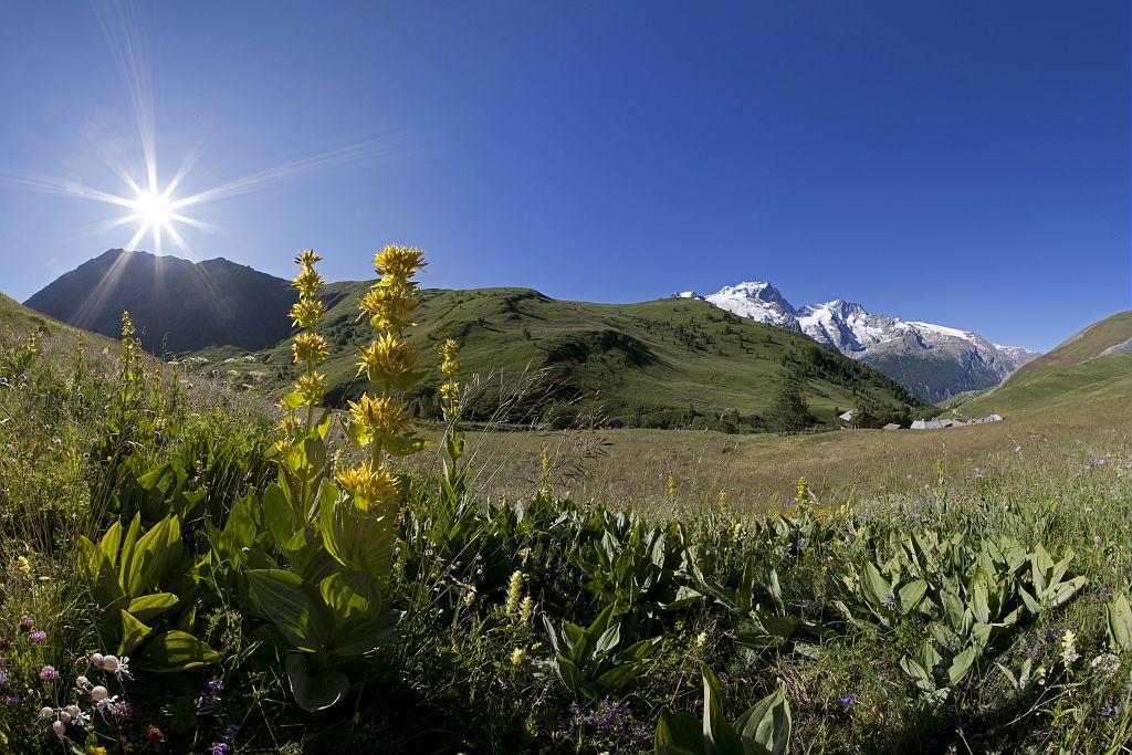 Le massif de la Meije, du vallon de Valfroide - © P.Saulay - Parc national des Ecrins