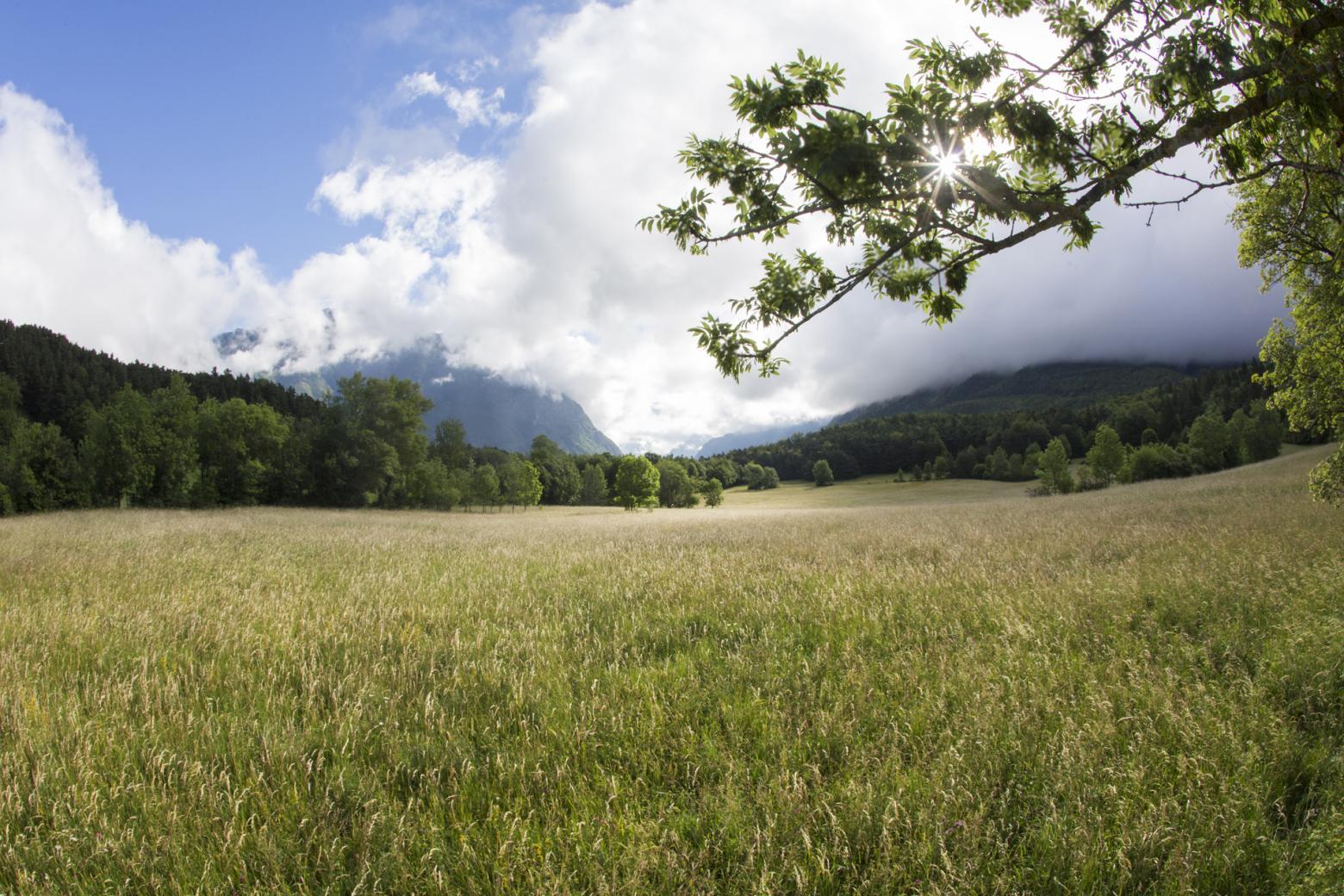 La parcelle du GAEC Holstein Passion (Xavier Maitretin et Stéphanie Gras-Lavigne) - Chauffayer © P.Saulay -Parc national des Ecrins