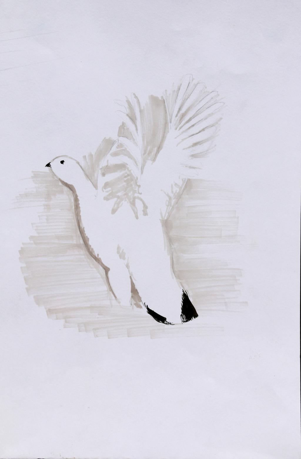 Julia Clapasson - 1er Prix ado-Laureat concours dessin hiver 2015 - Parc national des Ecrins