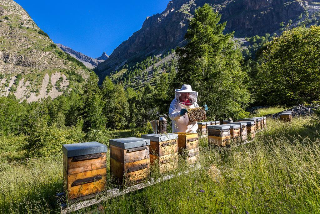 apiculteur Mathieu Picavet-Embrunais © Bertrand Bodin-Parc national des Ecrins