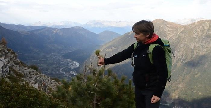 Apprendre à déterminer la croissance saisonnière d'un conifère (Cembro), avec Anne Delestrade, chercheure au CREA