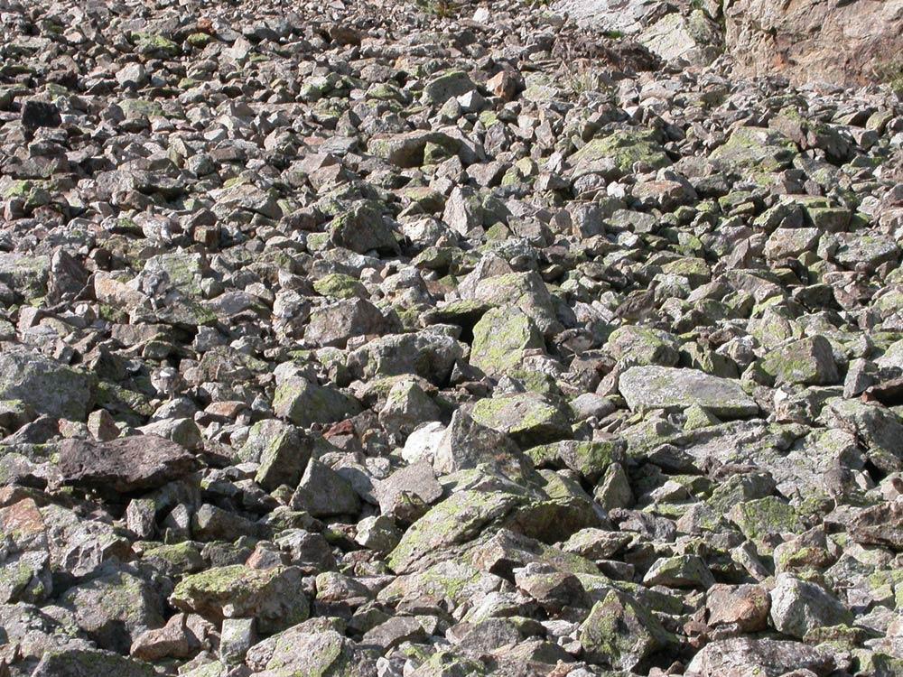 L'image mystère des lagopèdes © C.Albert - parc national des Ecrins 2011