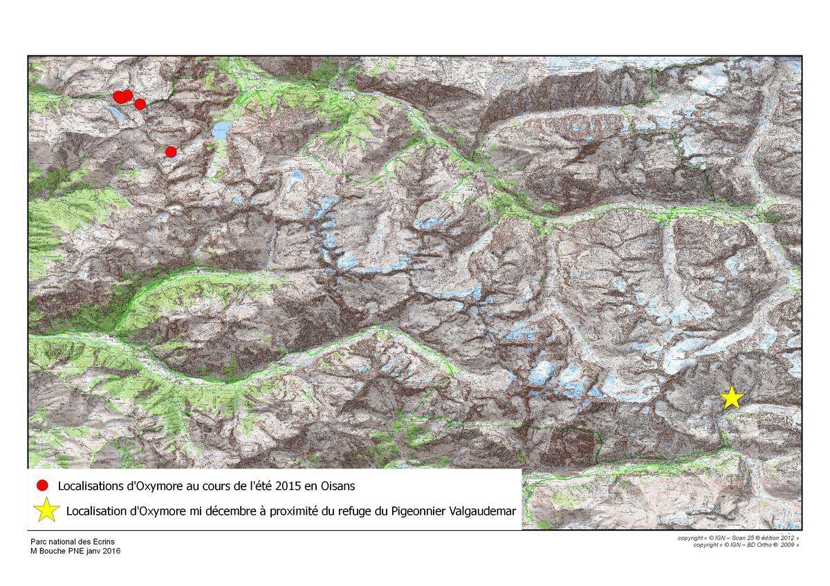 itinéraire Oxymore,  bouquetin marqué © Parc national des Ecrins
