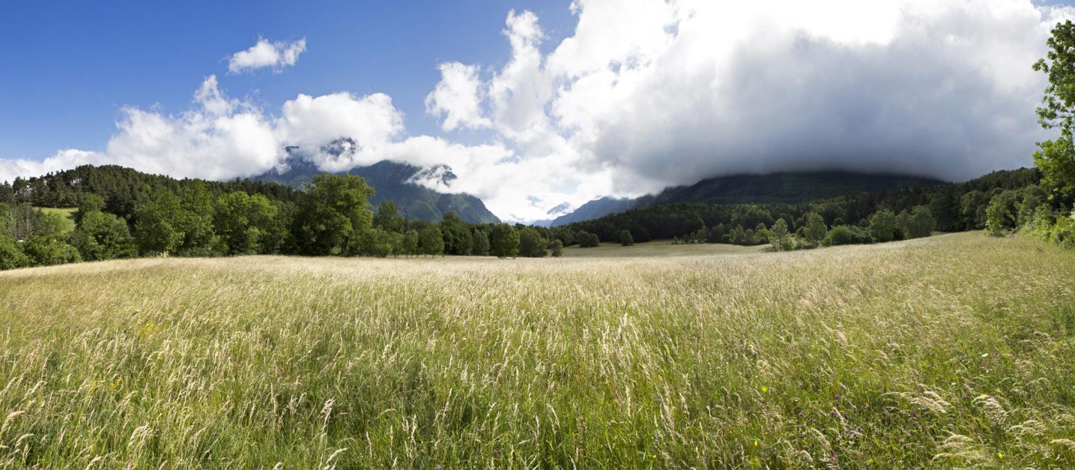 La parcelle Stéphanie Gras-Lavigne et Xavier Maitretin, du GAEC Holstein Passion à Chauffayer © Pascal Saulay - Parc national des Ecrins