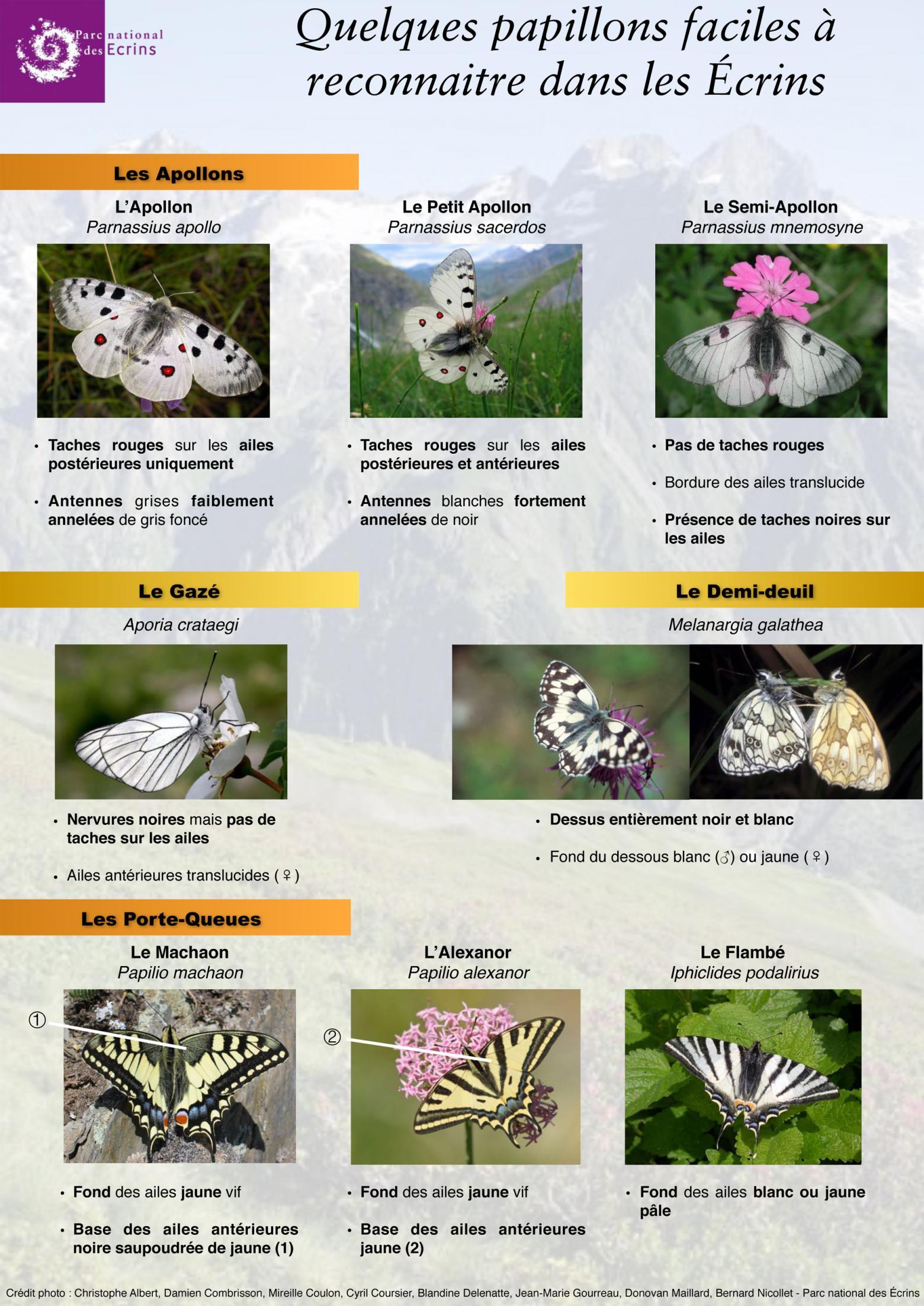 16 papillons des Ecrins - © Parc national des Ecrins - Donovan Maillard
