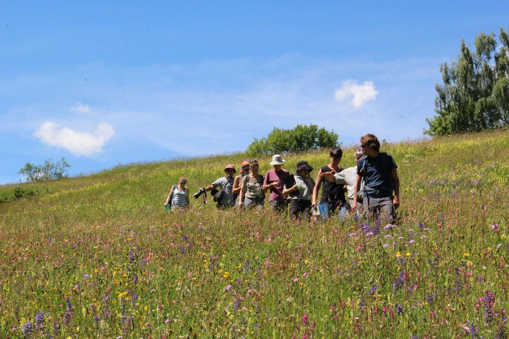 prairies fleuries - Briançonnais - concours 2016 - © Parc national des Écrins