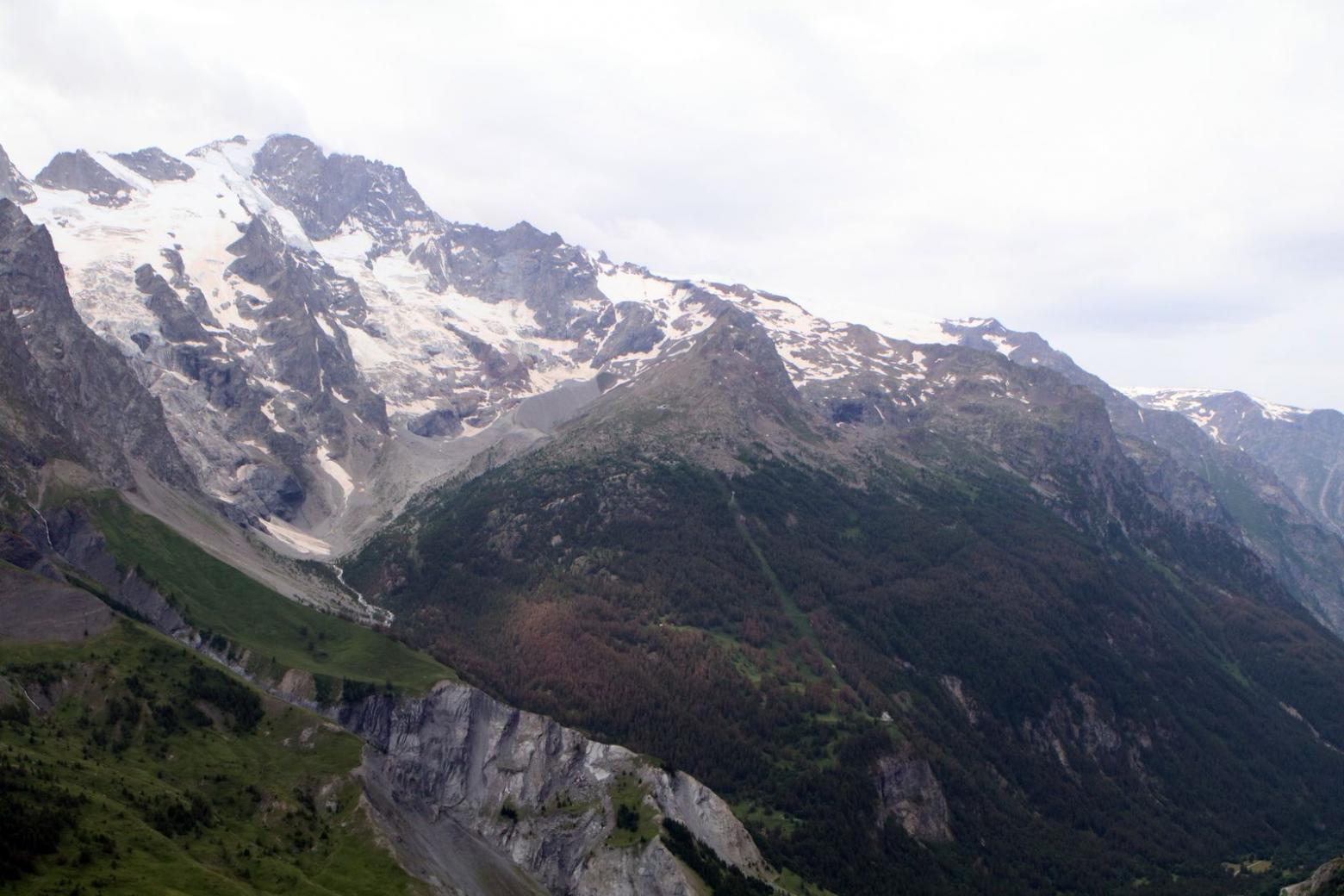 Tordeuse du mélèze - la Grave - juillet 2016  © C-Coursier - Parc national des Écrins