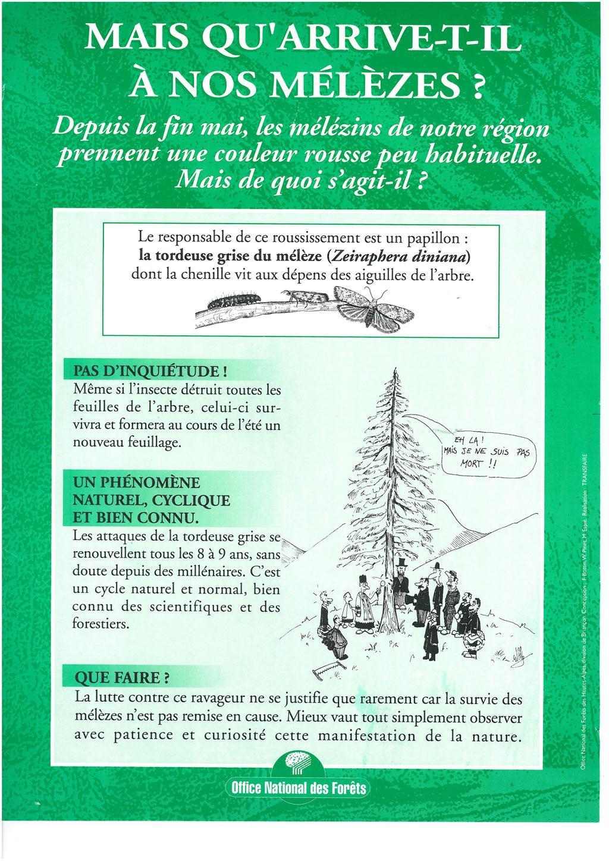 affichette ONF tordeuse du mélèze