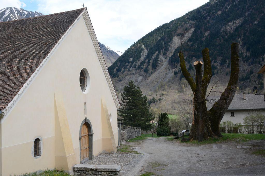 Tilleul église Saint-Maurice, taillé après le coup de vent de fev 2016 © D.Vincent - Parc national des Ecrins