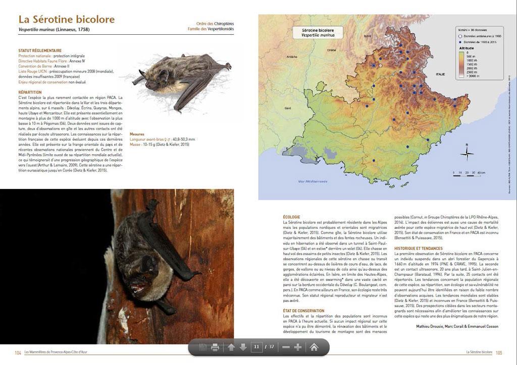 Atlas mammifères PACA - LPO - Page Sérotine bicolore