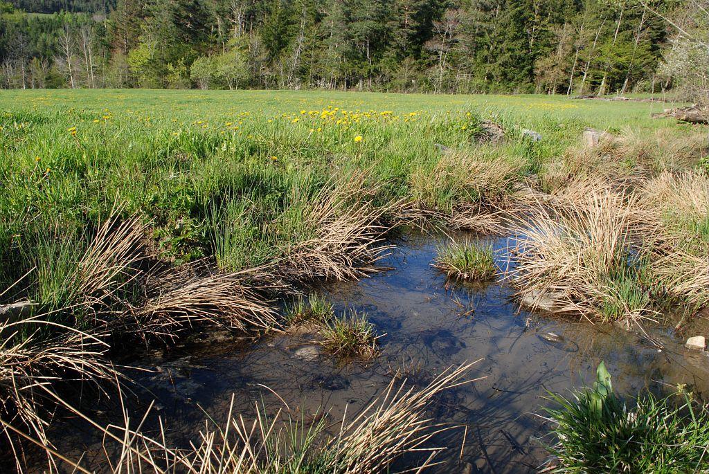 Canal - bocage au printemps © Dominique Vincent - Parc national des Ecrins