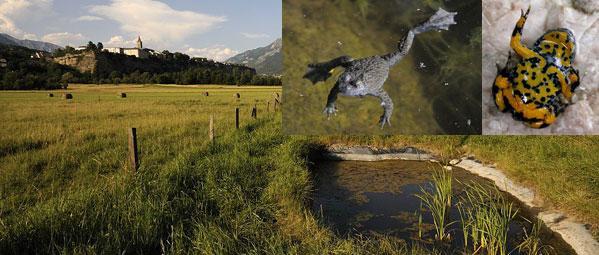 mare aux sonneurs - Embrun - © Parc national des Écrins
