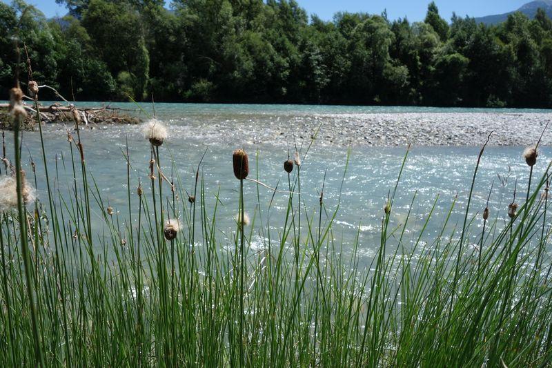 Au bord des eaux de la Durance © C.Dentant - Parc national des Ecrins