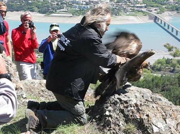 MIchel Phisel, lors du lâcher d'un aigle royal en 2013 dans l'Embrunais - photo O.Buteux - Dauphiné Libéré