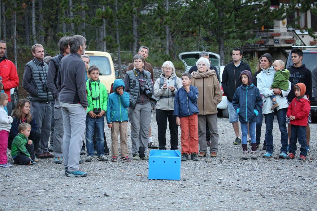 lâcher chouette hulotte - châteruoux- les-Alpes   - 16 août 2017 © M.Bouvier -Parc national des Écrins