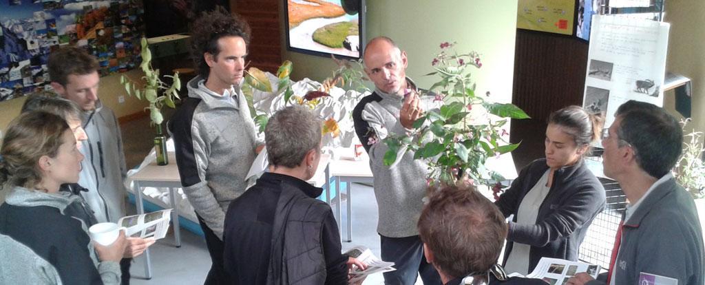 Détermination plantes envahissantes Oisans - oct 2017 © Parc national des Écrins