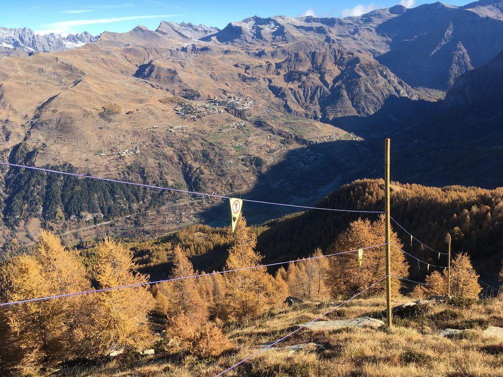 Zone d'hivernage matérialisée - protection tétras lyre  - Orcières 2017