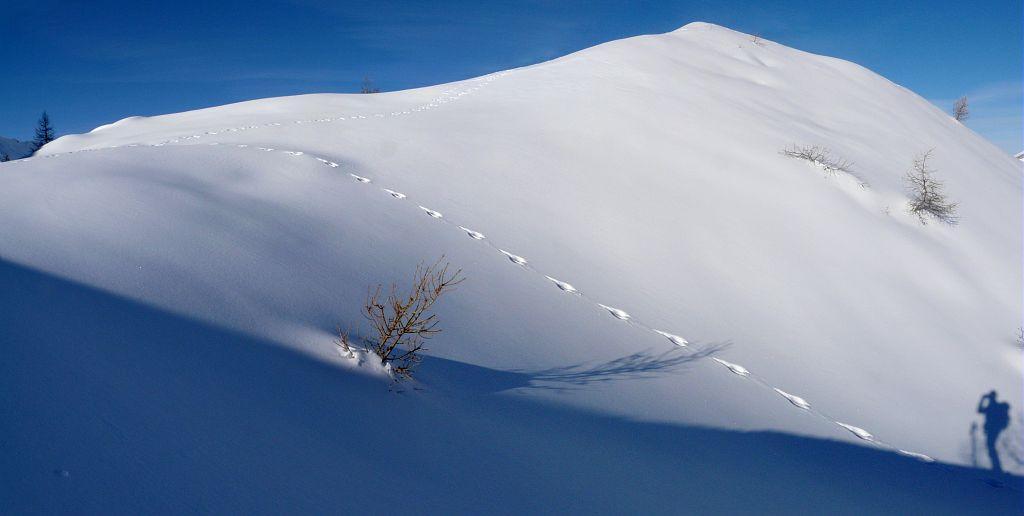 trace lièvre variable - ombre randonneur © JP Nicollet - Parc national des Ecrins