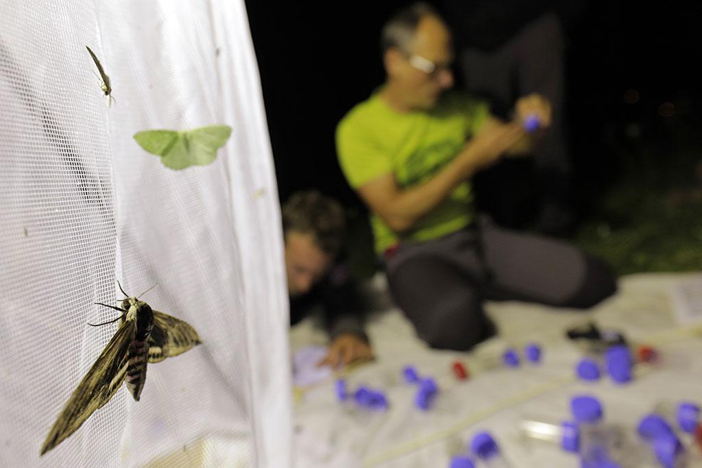 observation nocturne des insectes - Ecrins de nature 2018- - ©  P.Saulay - Parc national des Écrins