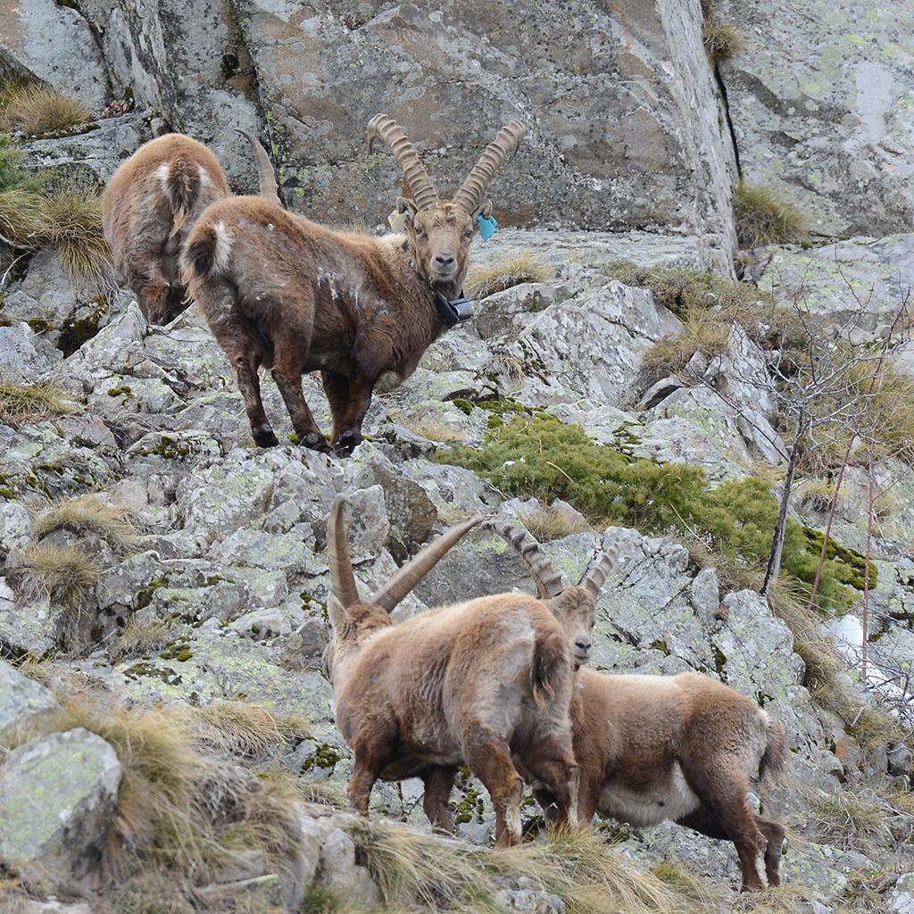 Sirac, 7 avril 2019 - photo R.Papet - Parc national des Ecrins