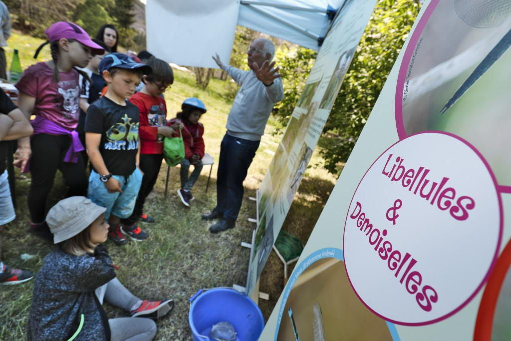 Libellules et demoiselles avec le Grenha - - scolaires -Ecrins de nature 2019 - Vallouise - photo P.Saulay - Parc national des Ecrins