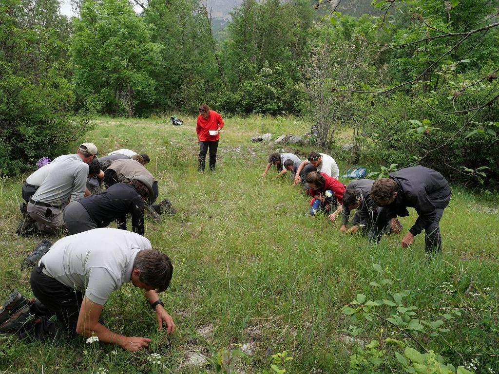 formation araignées à Vallouise - juin 2019 - photo M.G Nicolas - Parc national des Ecrins