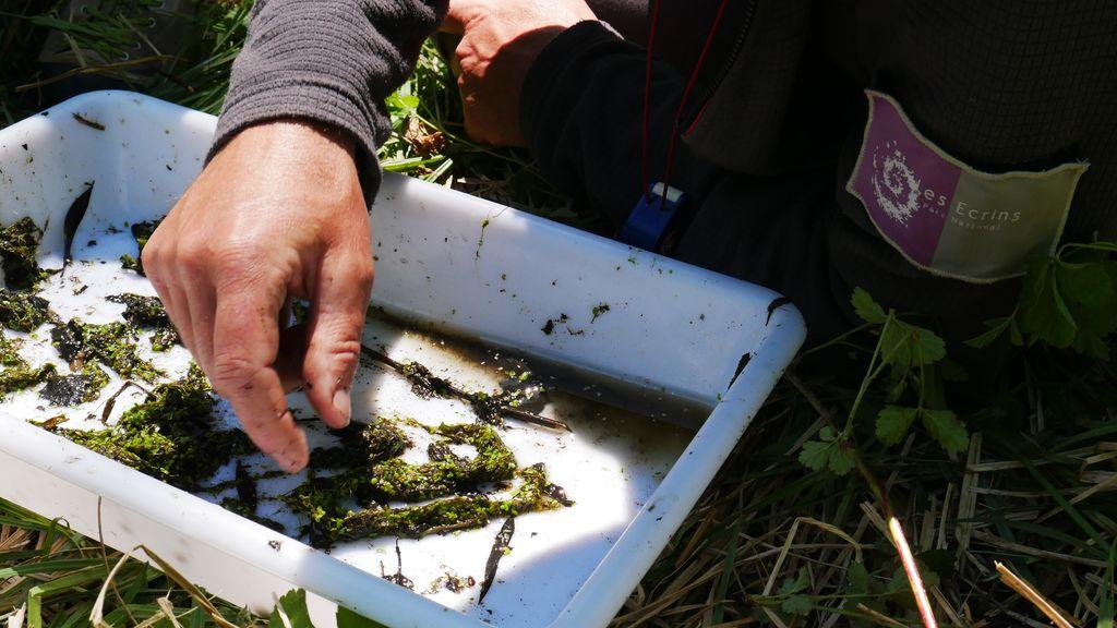 Inventaire coléoptères aquatiques 2019 -  © D.Combrisson - Parc national des Écrins