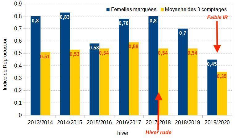 Comparaison de l'Indice de Reproduction des femelles «marquées» avec l'IR des femelles obtenu lors des comptages (population Champsaur)